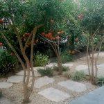 בוסתן רימונים בגינה קטנה