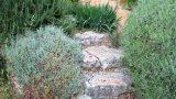 מדרגות-אבן-וחלוקי-נחל
