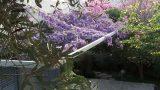 פריחה-אביבית-בגן