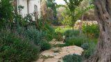צמחי-תועלת-ושביל-אבן