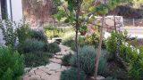 שביל-אבן-בגינה-ים-תיכונית